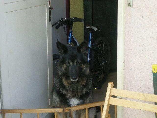 Recherche personne pour garder mon chien 1 se petites for Recherche personne pour tondre pelouse