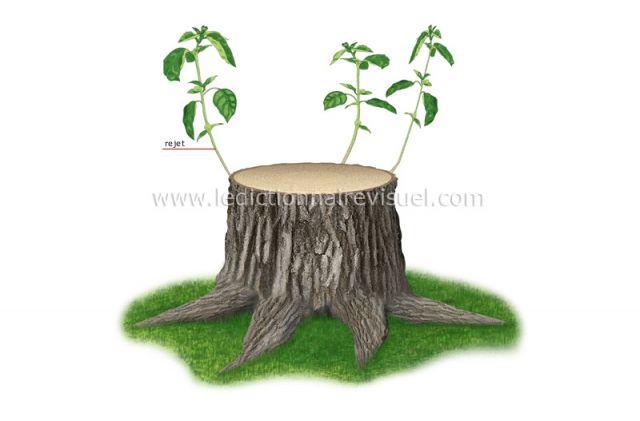 je propose de d raciner un arbre petit petites annonces services professionnels. Black Bedroom Furniture Sets. Home Design Ideas
